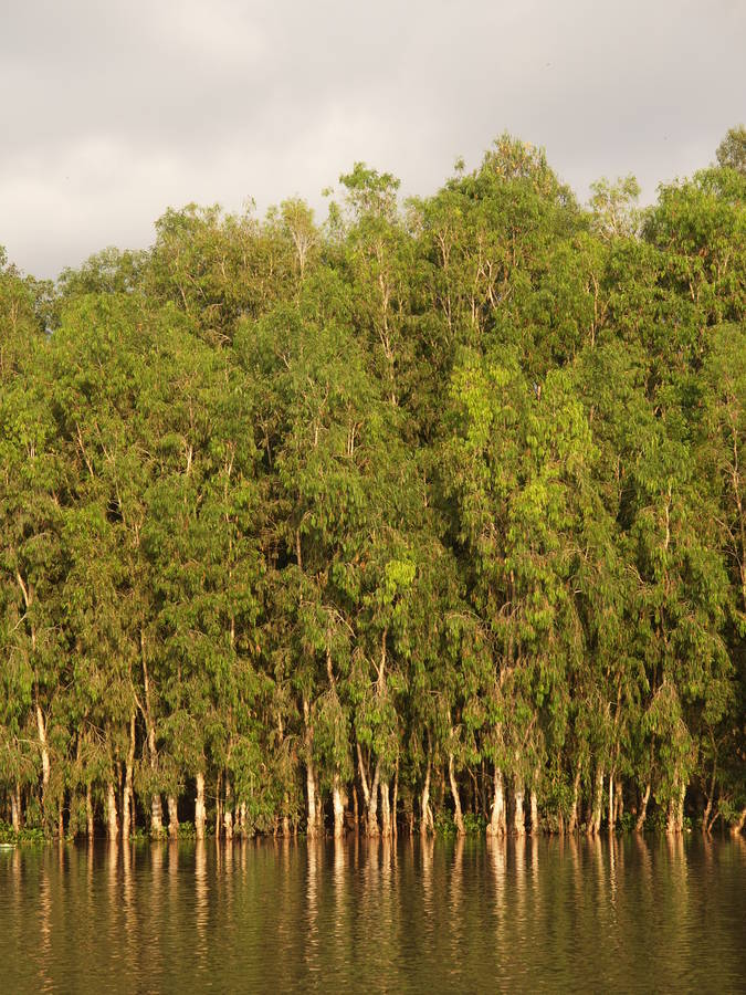 Tra Su flooded forest from outside- Chau Doc- Vietnam
