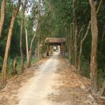 way to tra su forest
